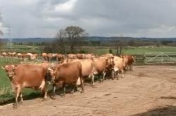 Maths at work: Monitoring milk output